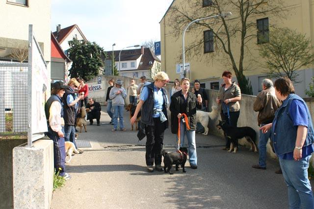 Stadtgang Junghunde und BGVP Gruppe in Günzburg