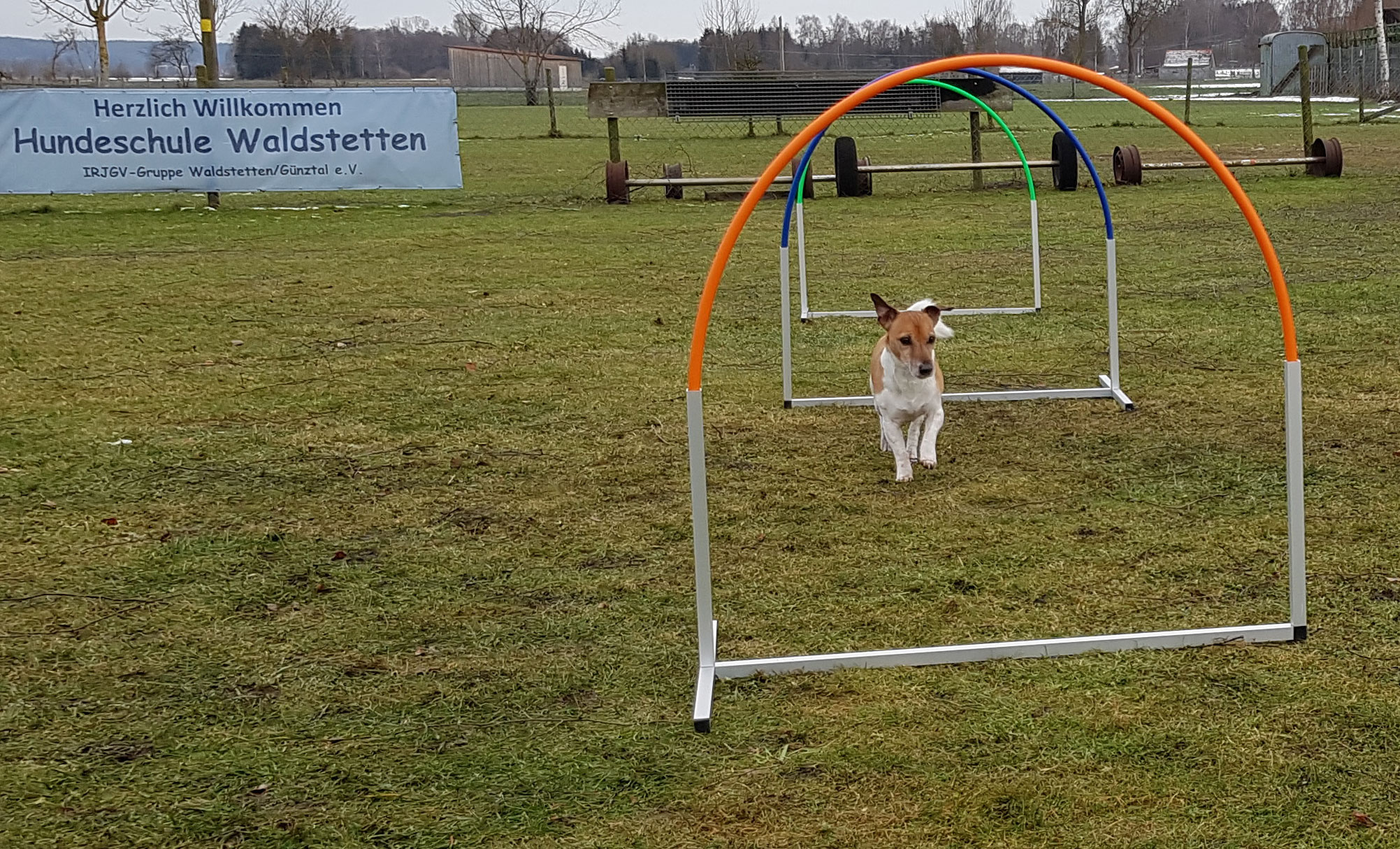 Hoopers Agility bei der Hundeschule Waldstetten Kreis Günzburg