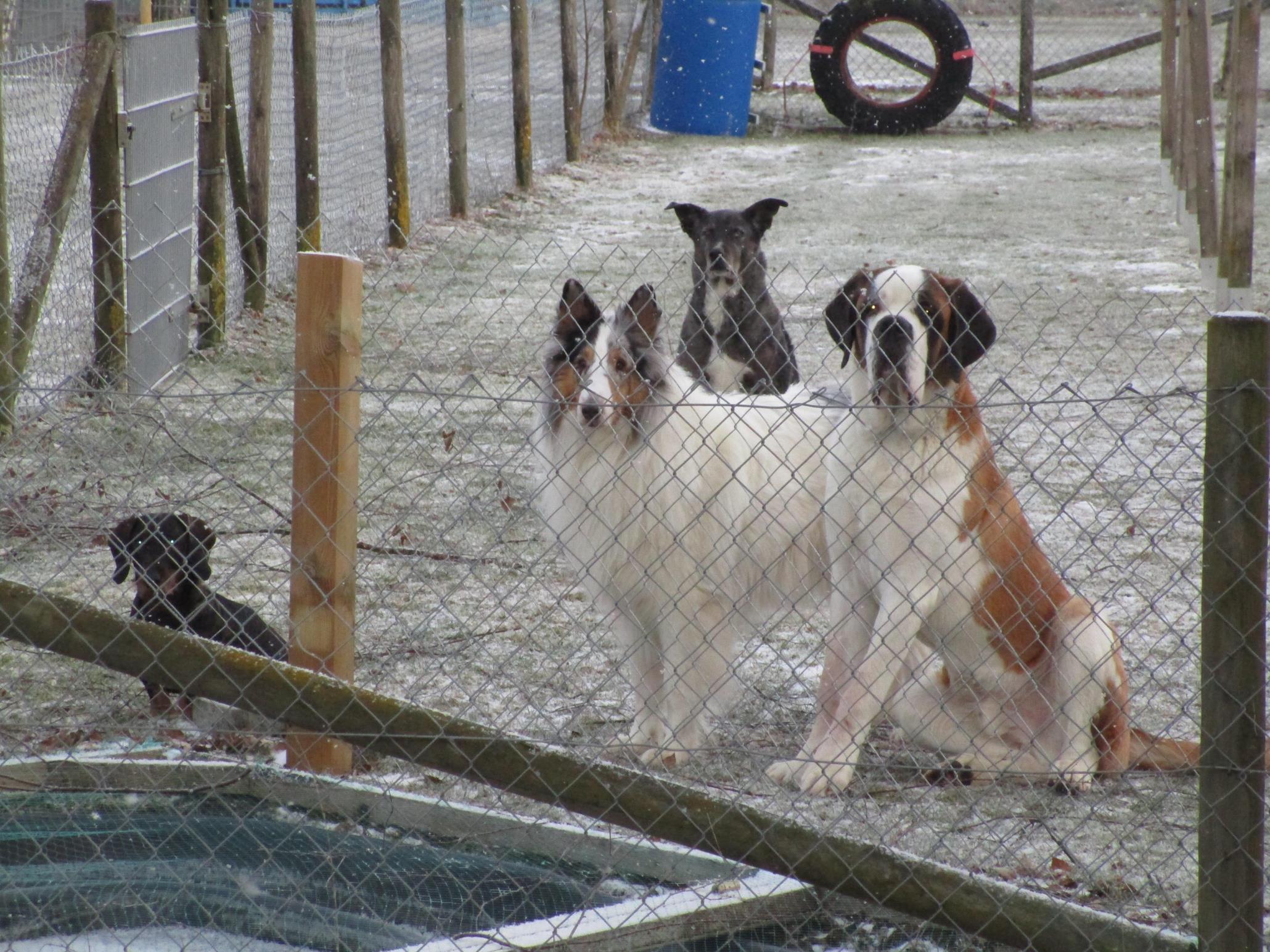 Helferfest der Freunde von der Hundeschule Crazy Dogs in Waldstetten im Landkreis Günzburg