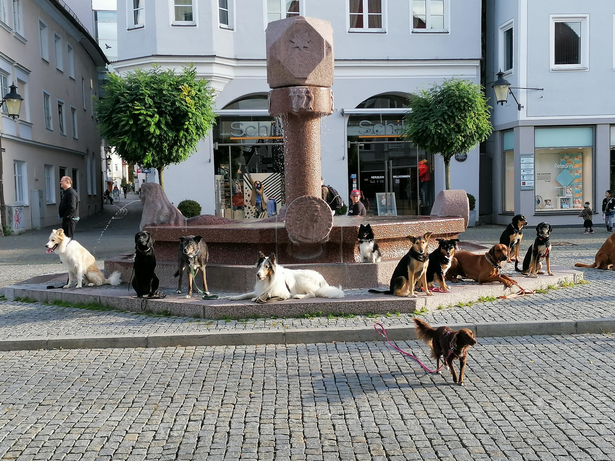 Hundeschule Waldstetten zum Stadtgang in Günzburg
