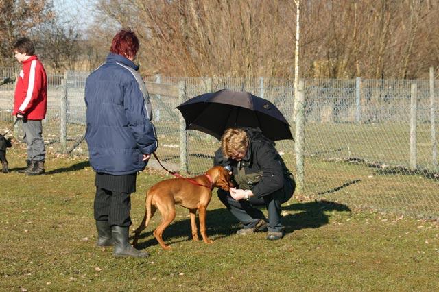 Welpenkurs in der Hundeschule Waldstetten